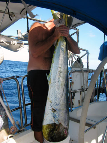 Jan and a huge Mahi